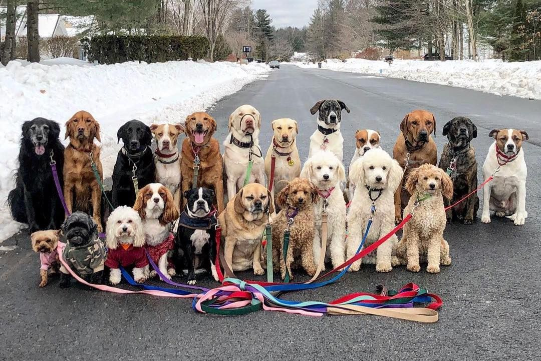 Group Photos Of Dogs Who Pack Walk Together Funny Animals Cute Dogs And Puppies Animal Shaming