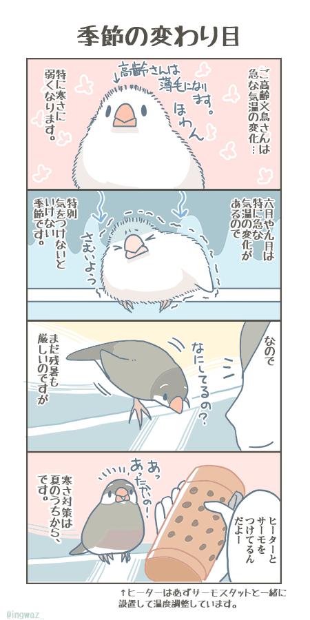 文 新木南生さん Ingwaz Twitter 鳥 絵 動物 図鑑 小鳥 イラスト
