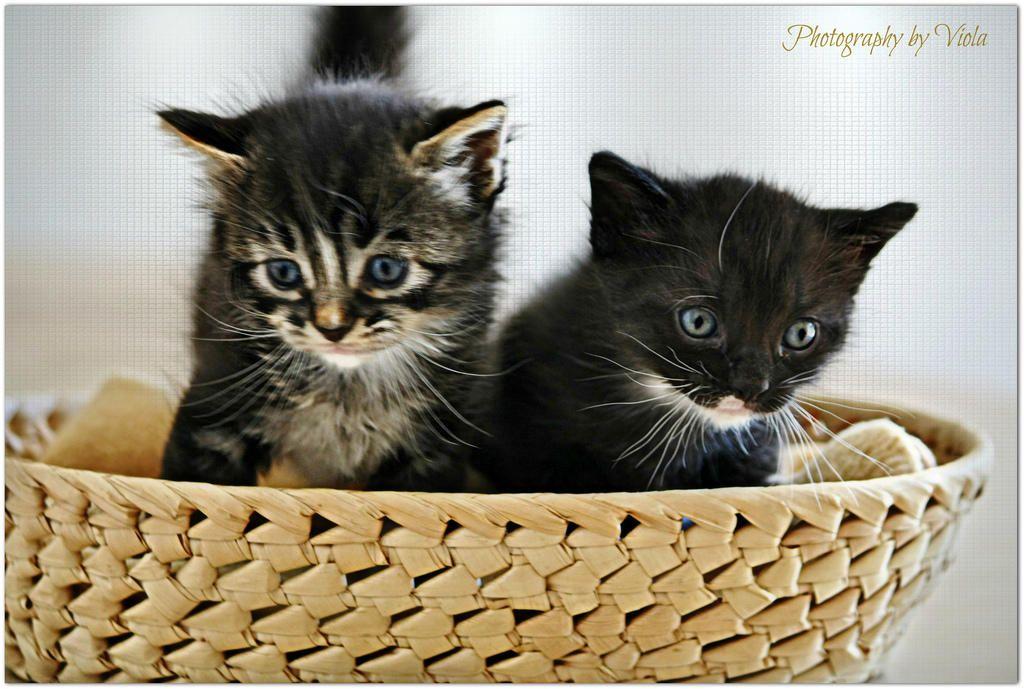 Happy Cats 2