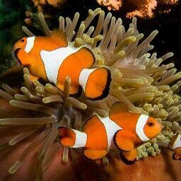 Colores Saltwater Fish Tanks Marine Fish Tanks Fish