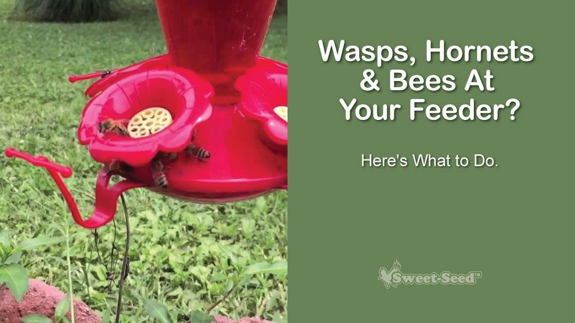 How can i keep wasps bees away from hummingbird