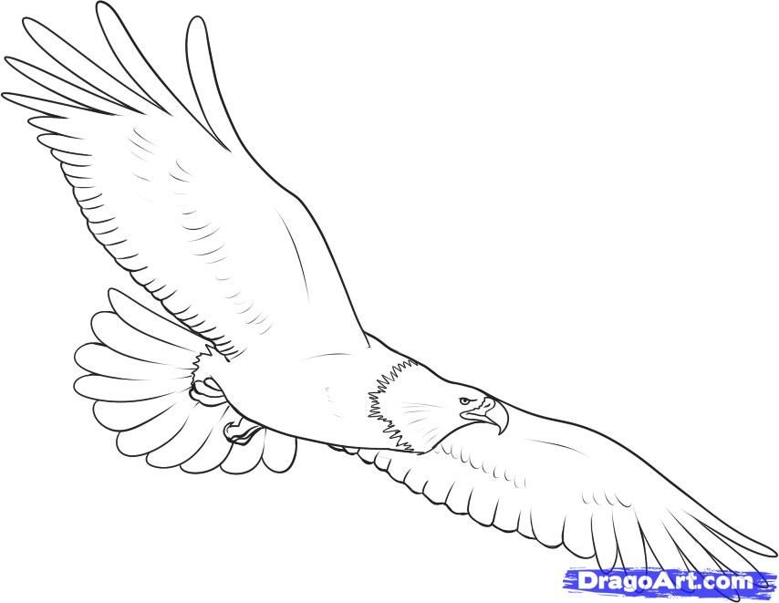 how to draw an eagle step 7 | Art - Drawing & Sketching ...