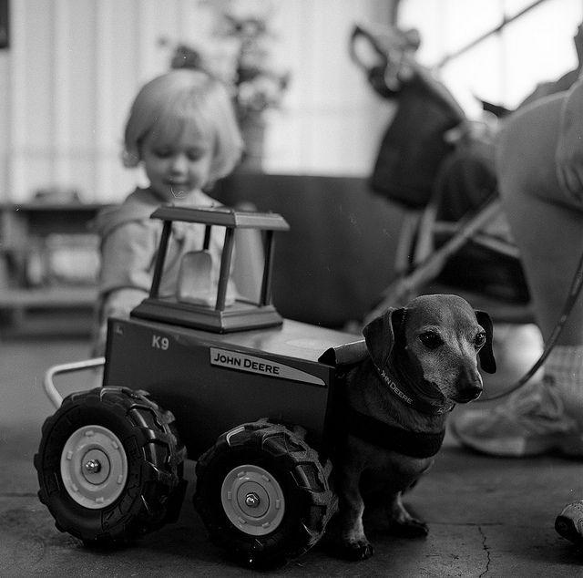 Tractor Dachshund My Dog Me 1 Dachshund Weenie Dogs