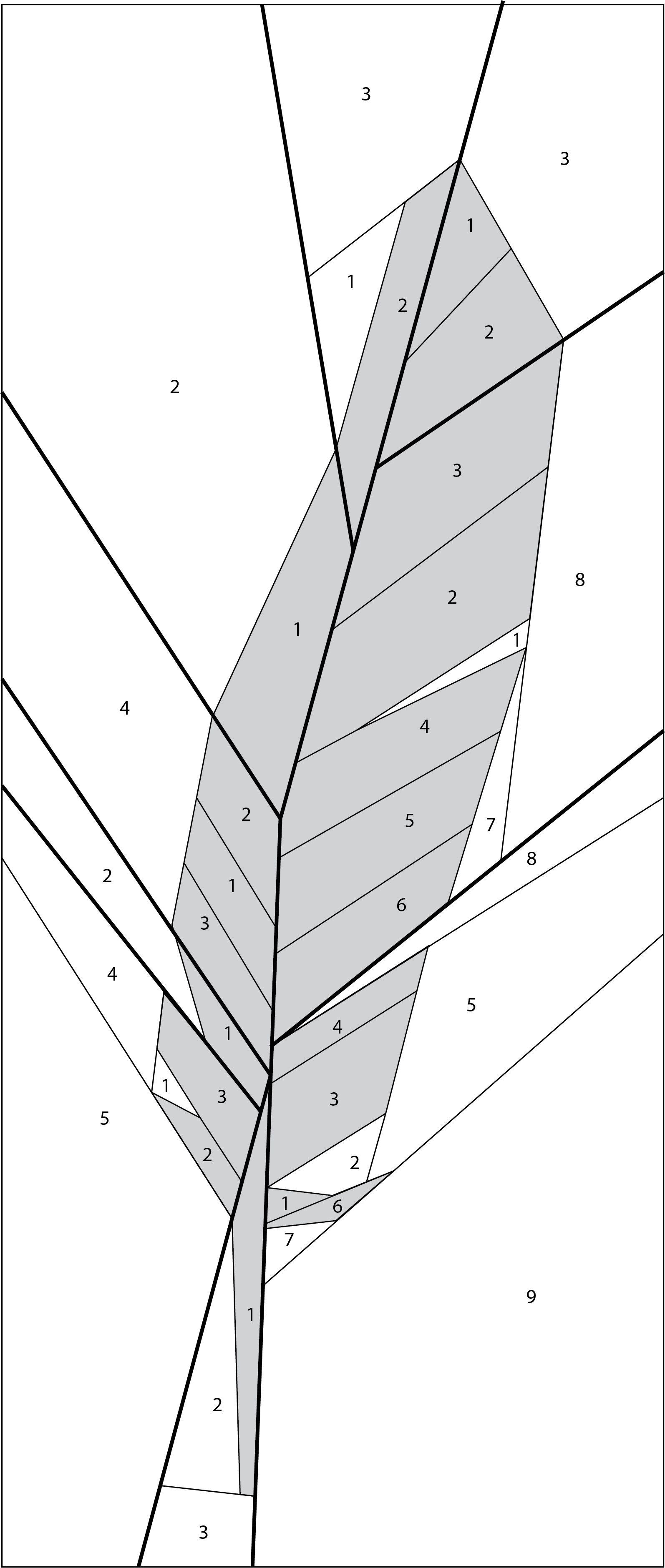 feather2.jpg 1,594×3,761 pixels   Paper piecing und PW Blöcke ...