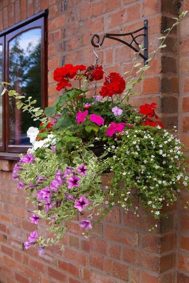 Kwiaty Wiszace Kwiaty Doniczkowe E Ogrodek Plants Plant Decor Hanging Plants