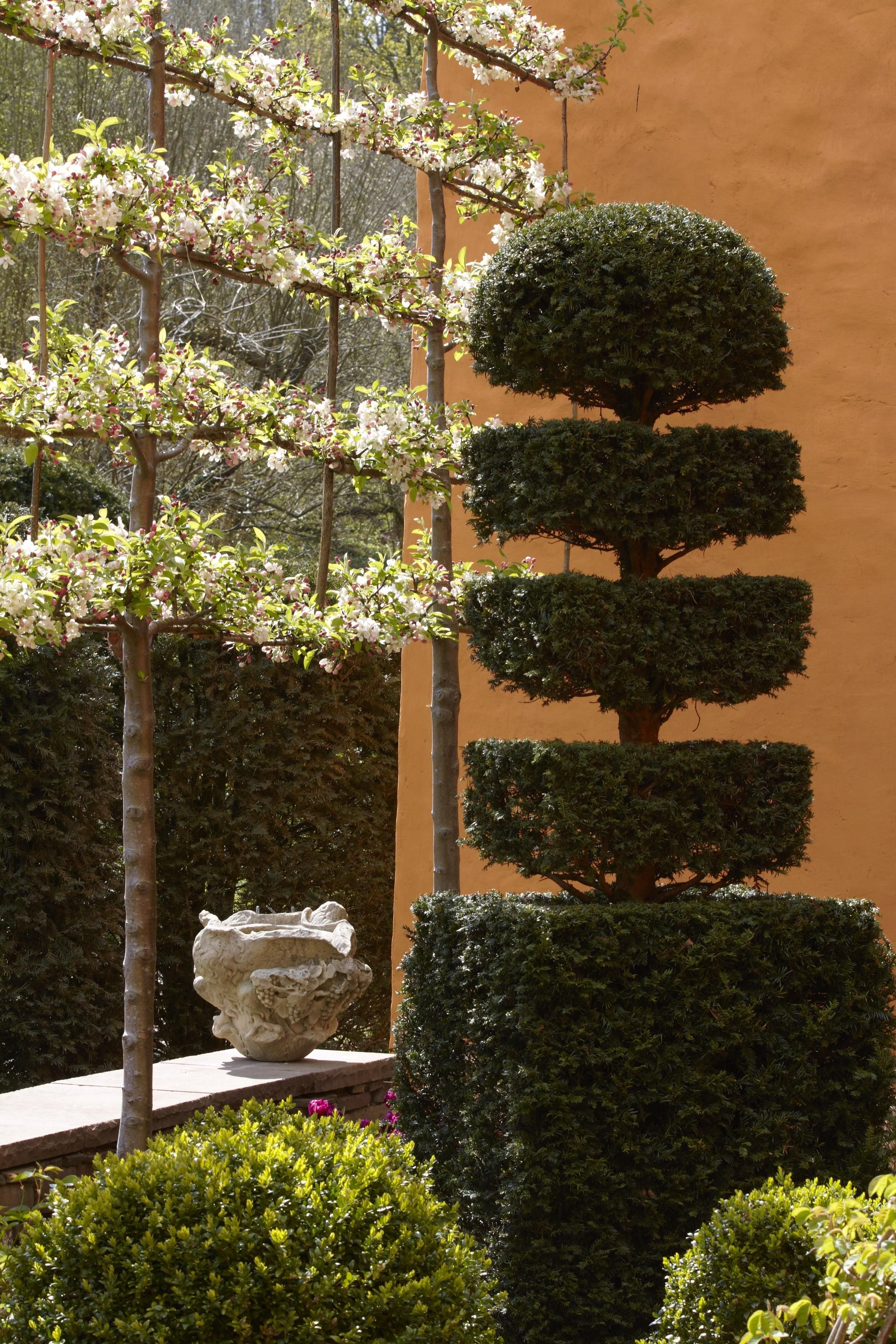 Landscaping 101: Pleached Trees | Pinterest | Topiary, Gardens and ...