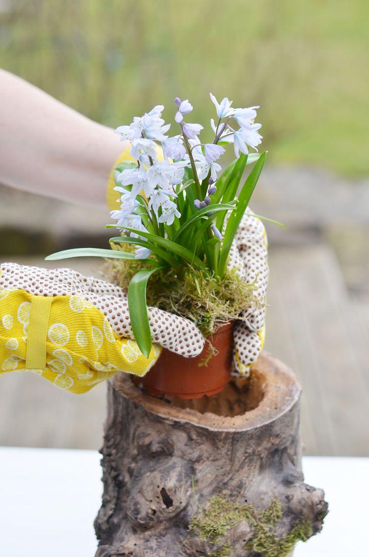 G rtnern baumstamm bepflanzen for Deko baumstamm