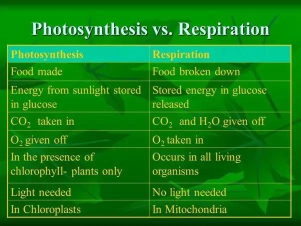 photosynthesis vs cellular respiration Google Search