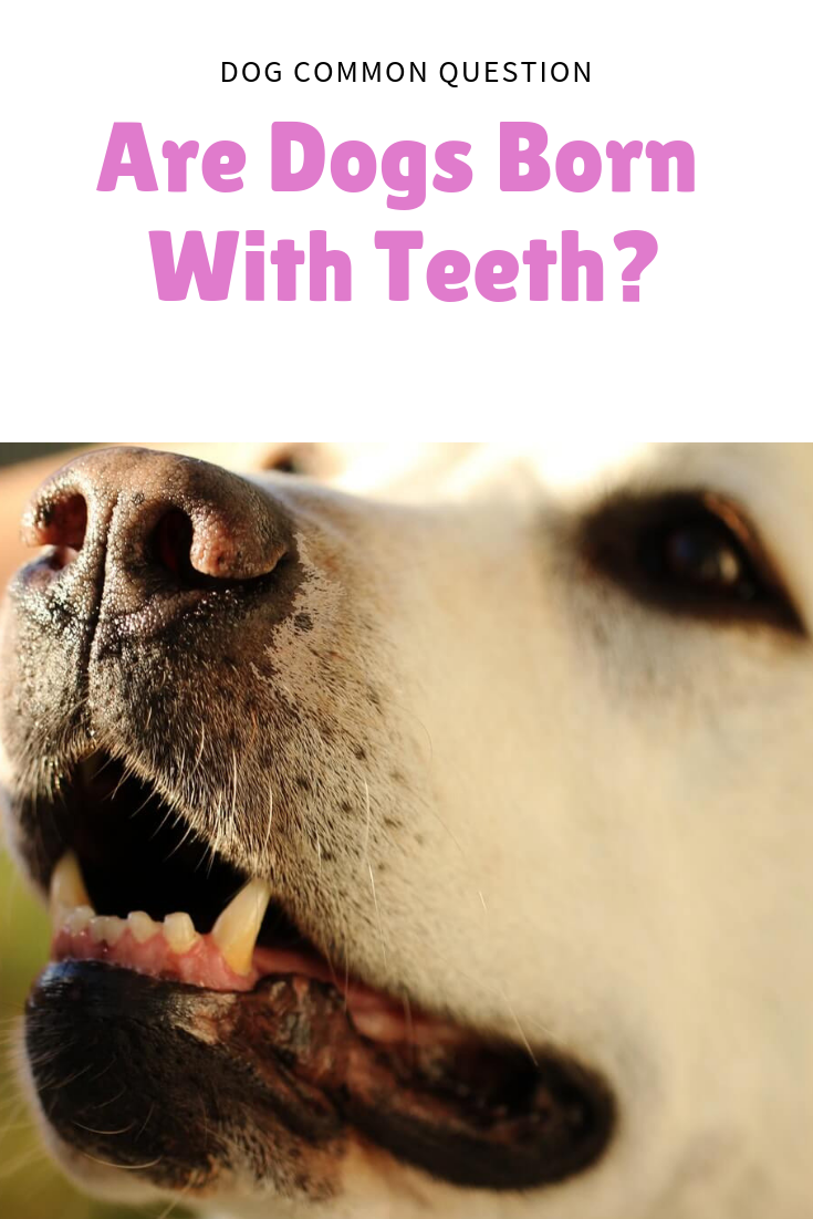 Are Dogs Born With Teeth Dogs, Puppy dental, Pets