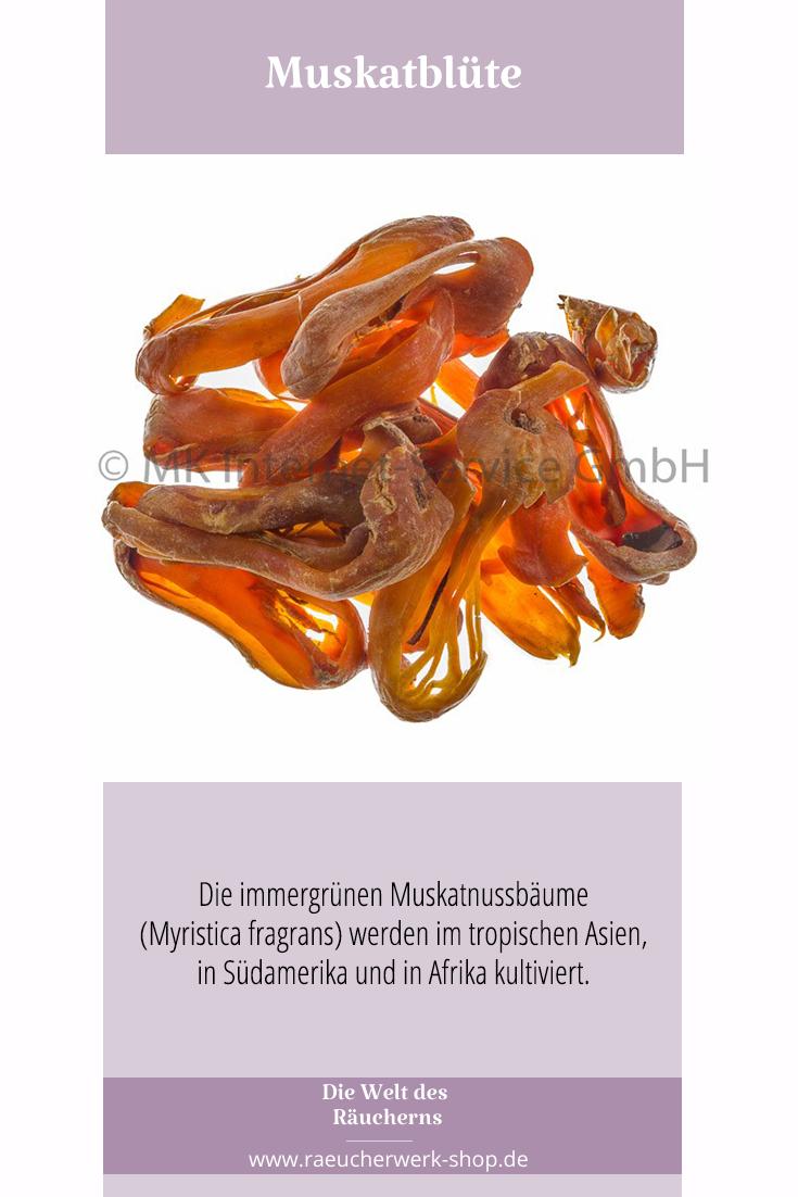 Muskatblute Kultiviert Verzehr Rauchern
