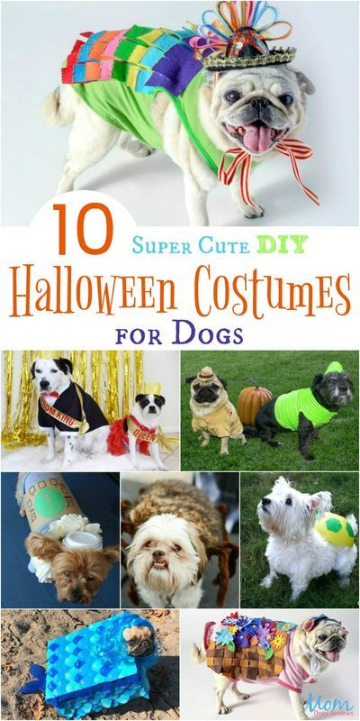 10 Super Cute DIY Halloween Costumes for Dogs -   19 diy Halloween Costumes cat ideas