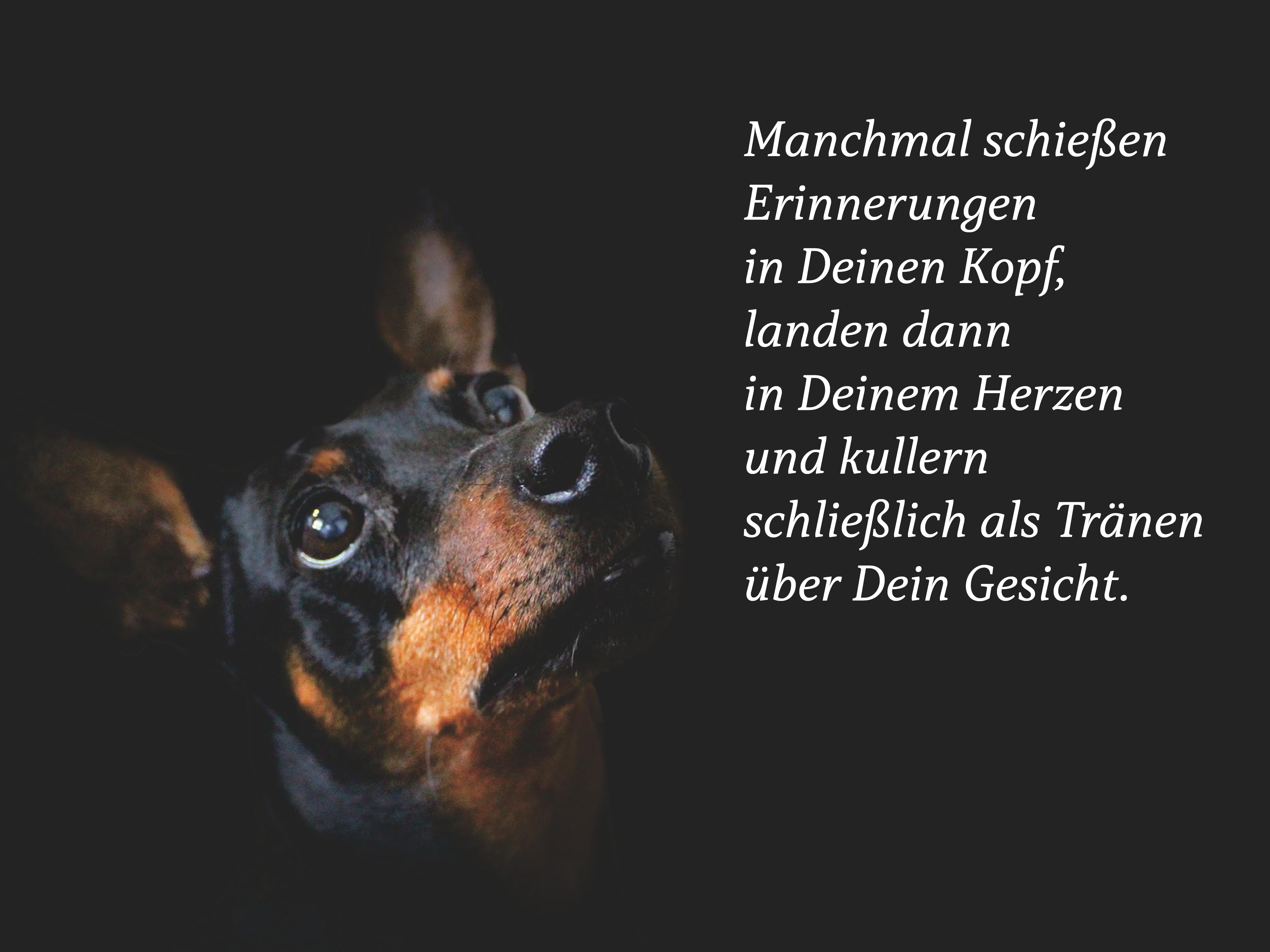 Manchmal Schiessen Erinnerungen In Deinen Kopf Trauergedichte Anubis Tierbestattung Hund Zitat Vermisse Meinen Hund Spruche Tierliebe