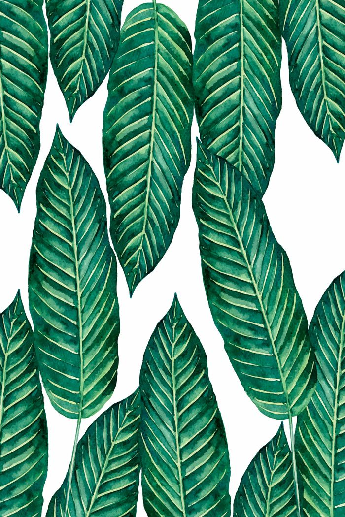 green,natural,palm,tree...