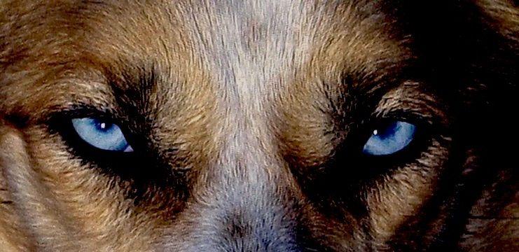 Musher APK v1.0 Musher, Dogs, Husky