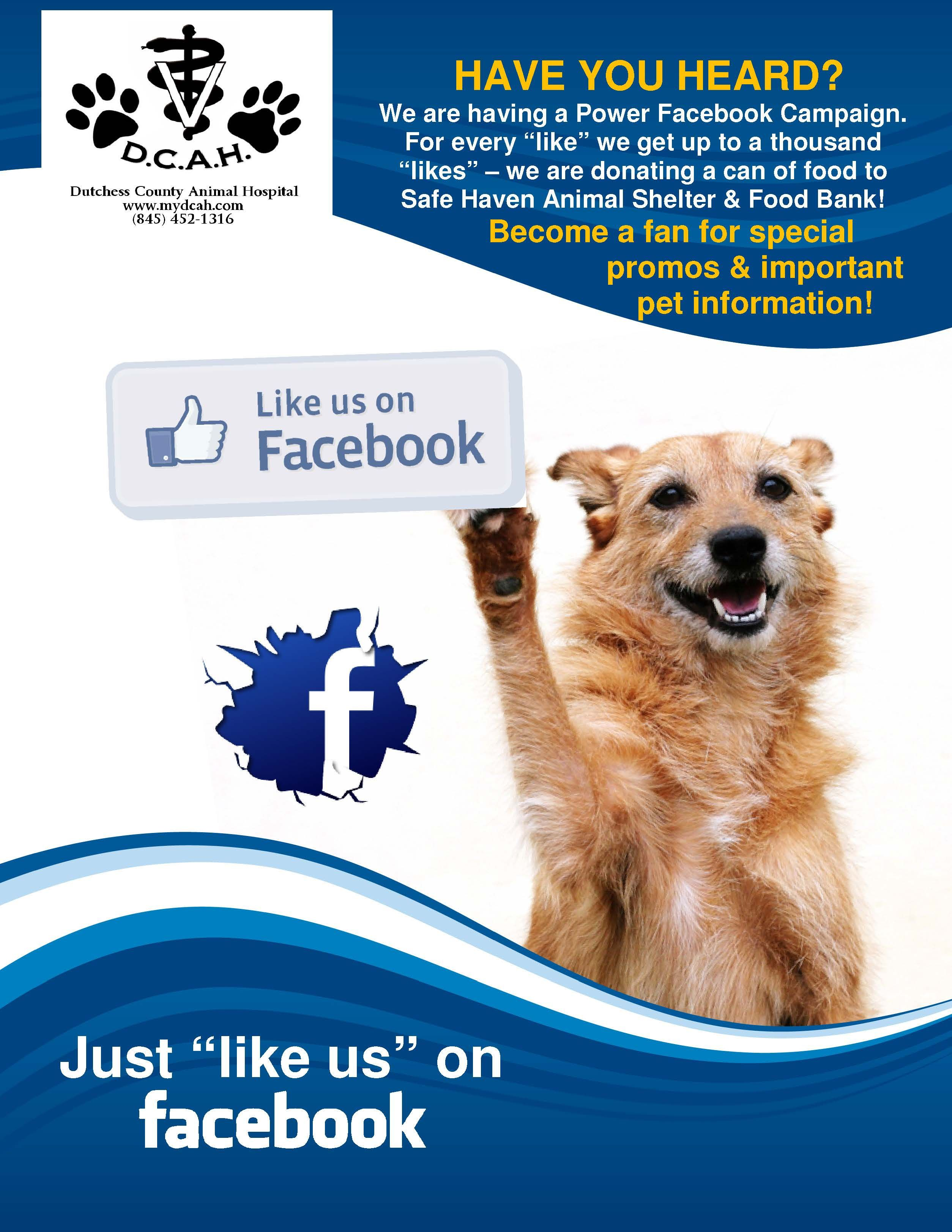 Share And Like Us On Facebook You Can Find More Details By Visiting The Image Link Dogscaring With Images Cat Care Pet Clinic Dog Care