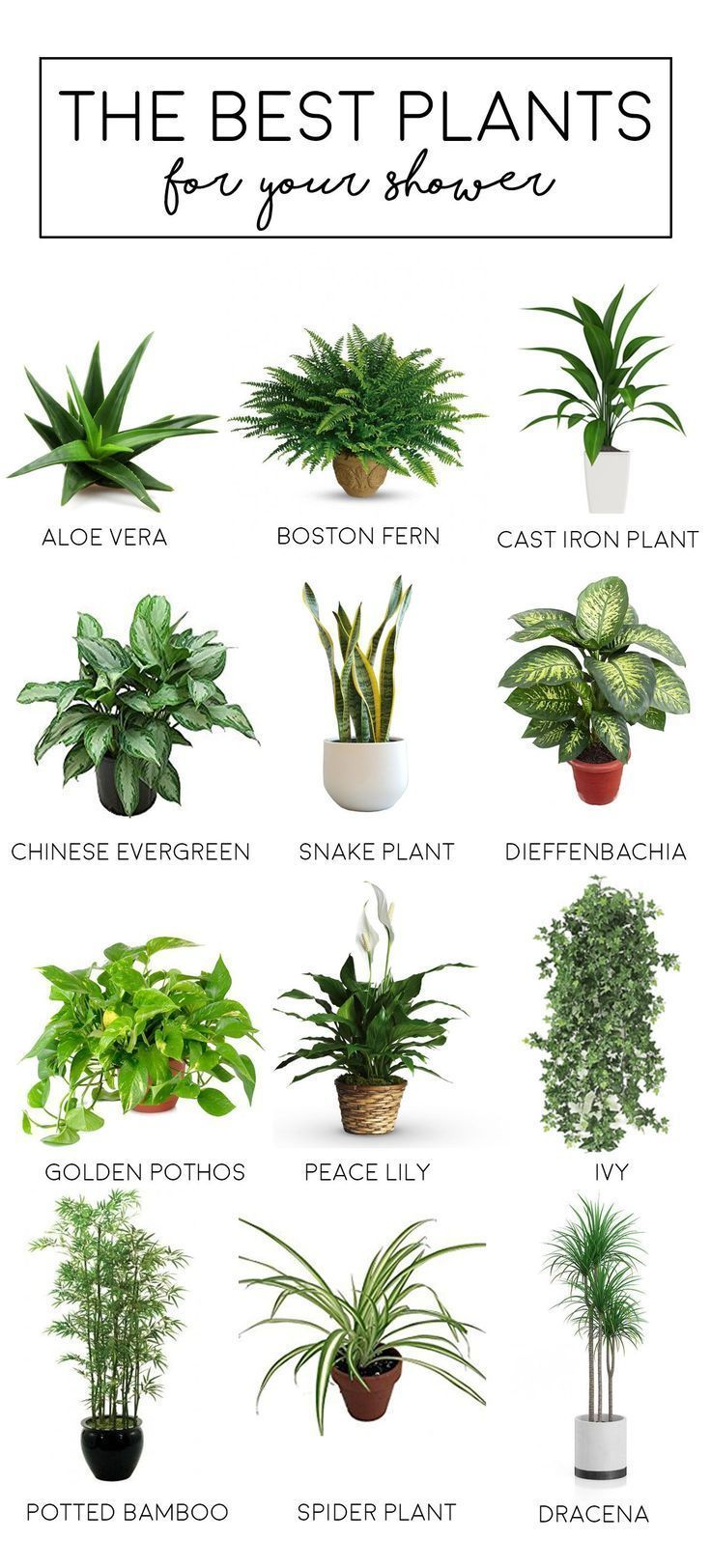 Best plants to have in your bathroom or shower. # ...