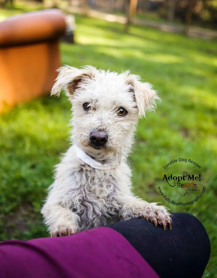 Adopt washington girl on petfinder pooch pets adoption