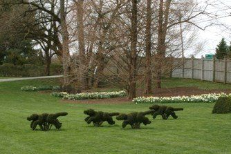 Early American Gardens: Design - Topiary
