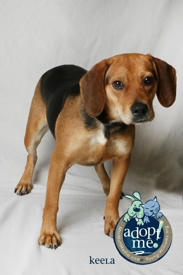 Adoptable Pets Knoxville Tn Youngwilliamsanimalcenter