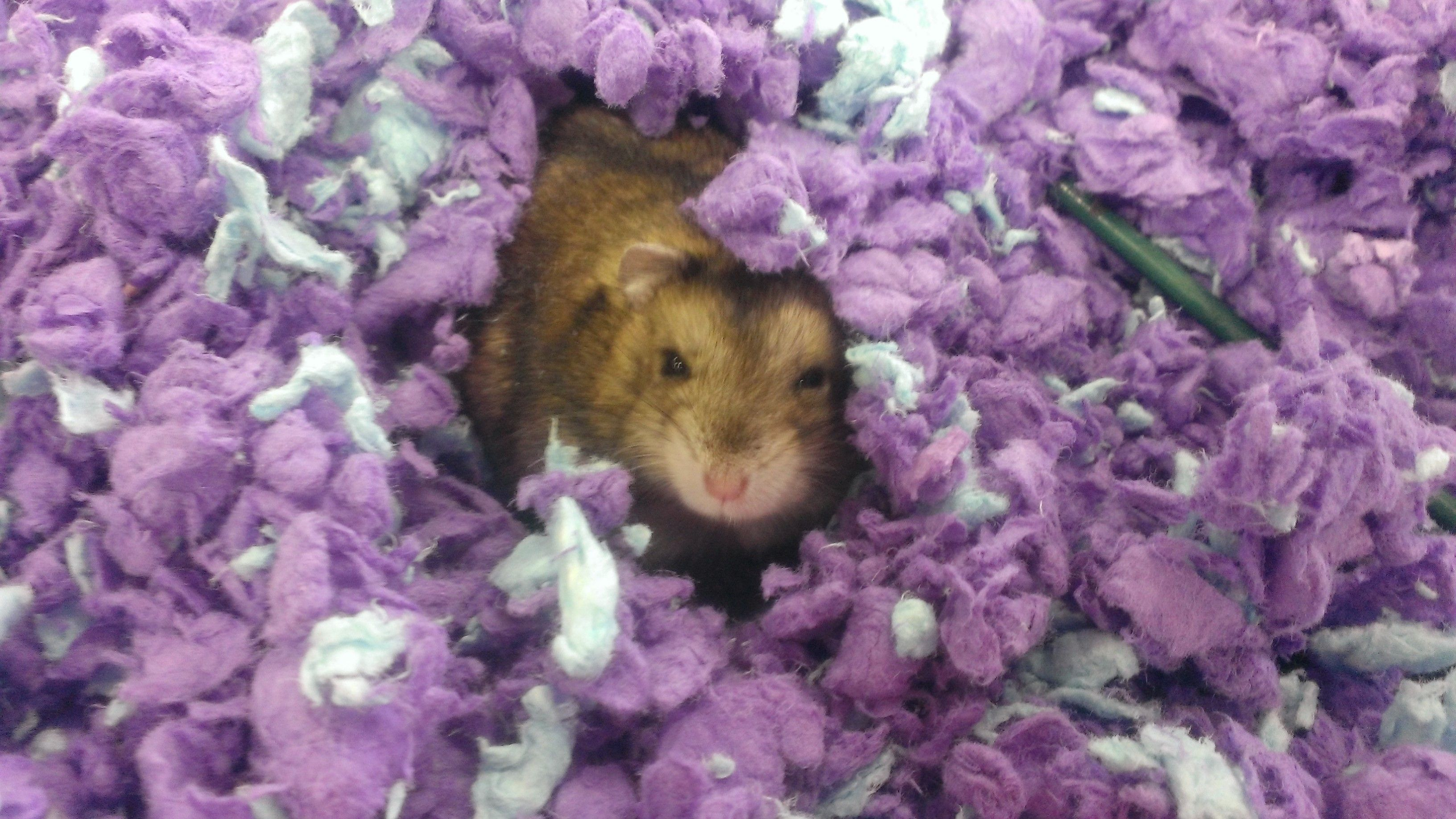 Hamster Who Played With Me At A Local Pet Store Hamster Pet Store Pets