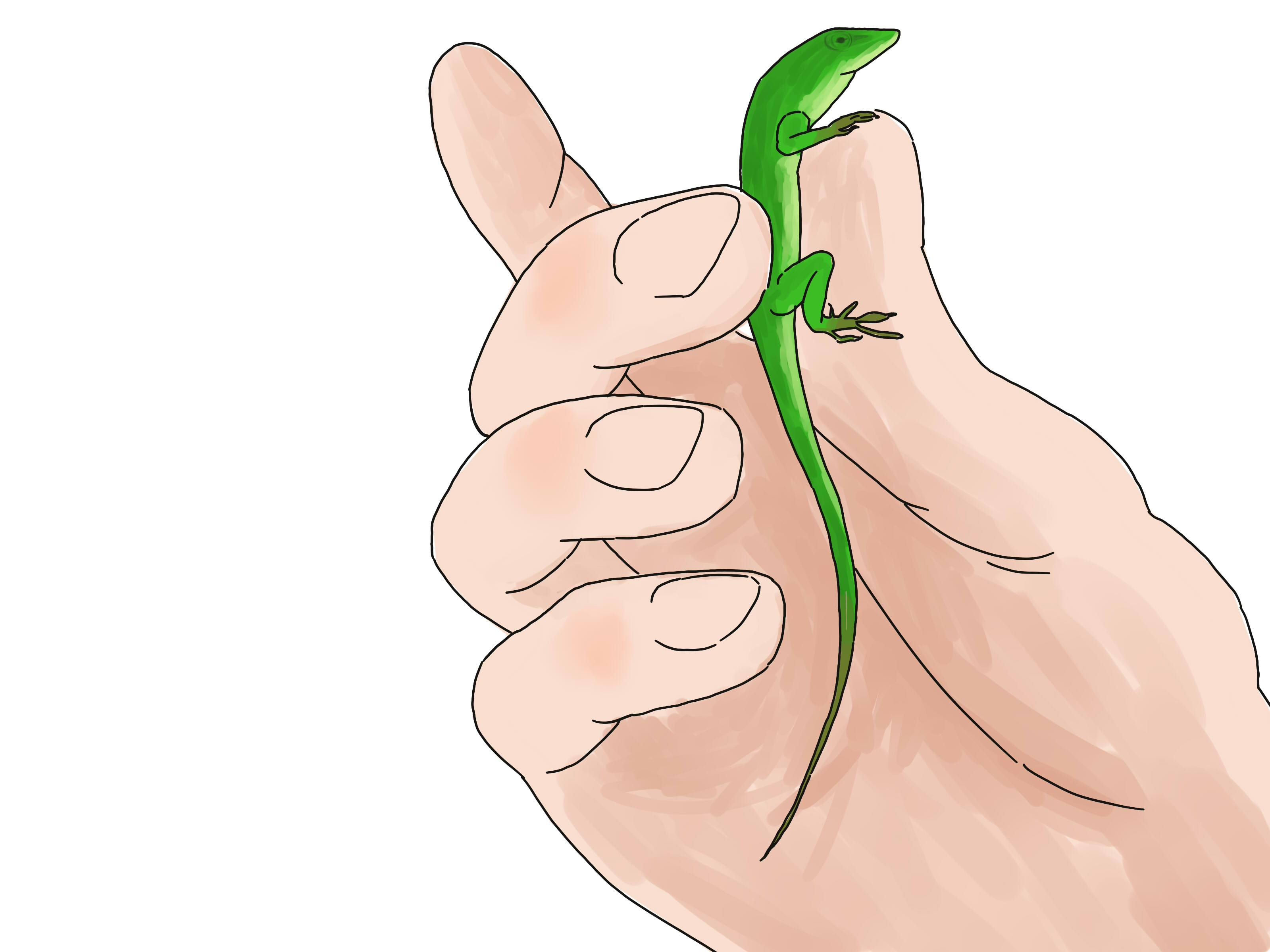 care for green anole lizards lizards reptiles and animal