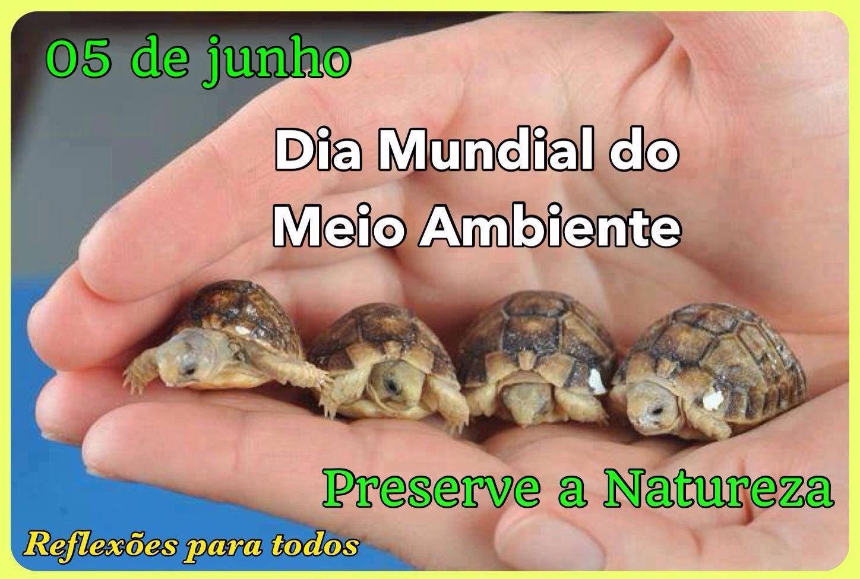 Dia Mundial Do Meio Ambiente Direitos Fundamentais Meio