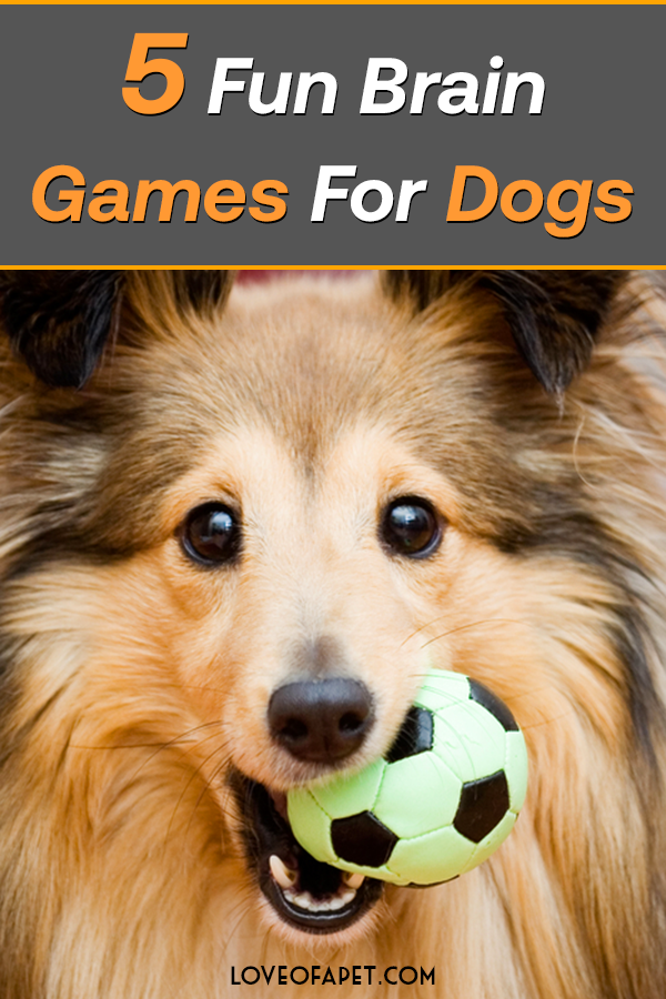5 Fun Brain Games For Dogs in 2020 (With images) Brain