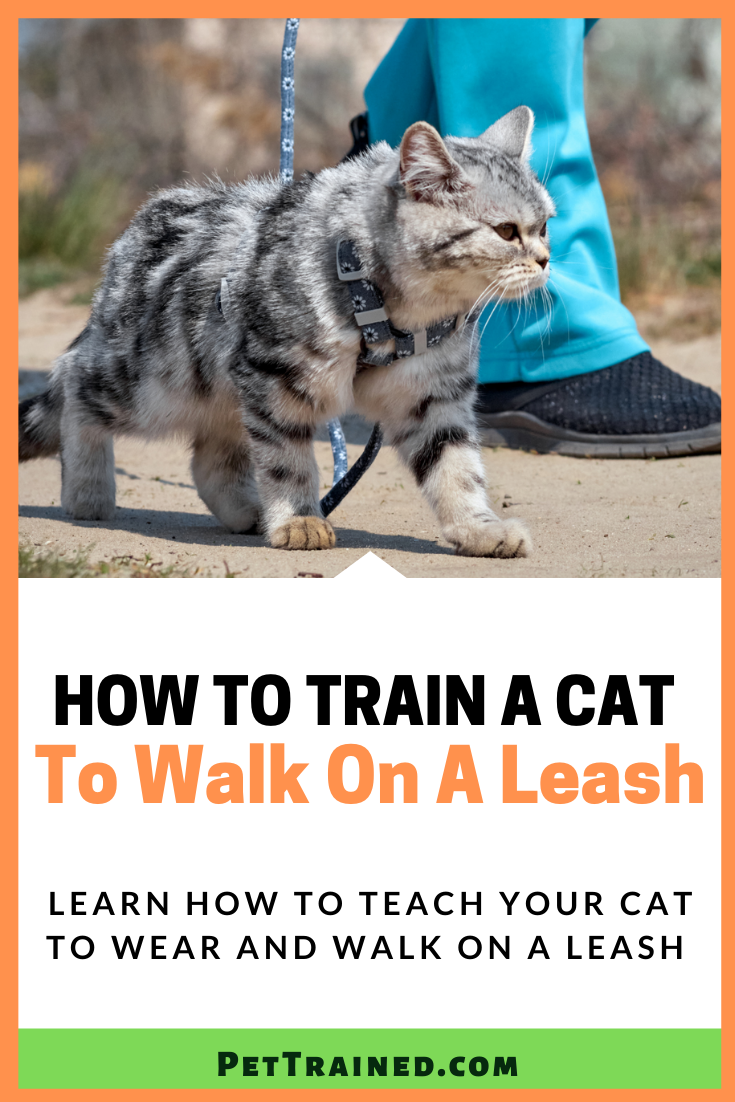 How To Train A Cat To Walk On A Leash Cats Cat Training Cat Leash