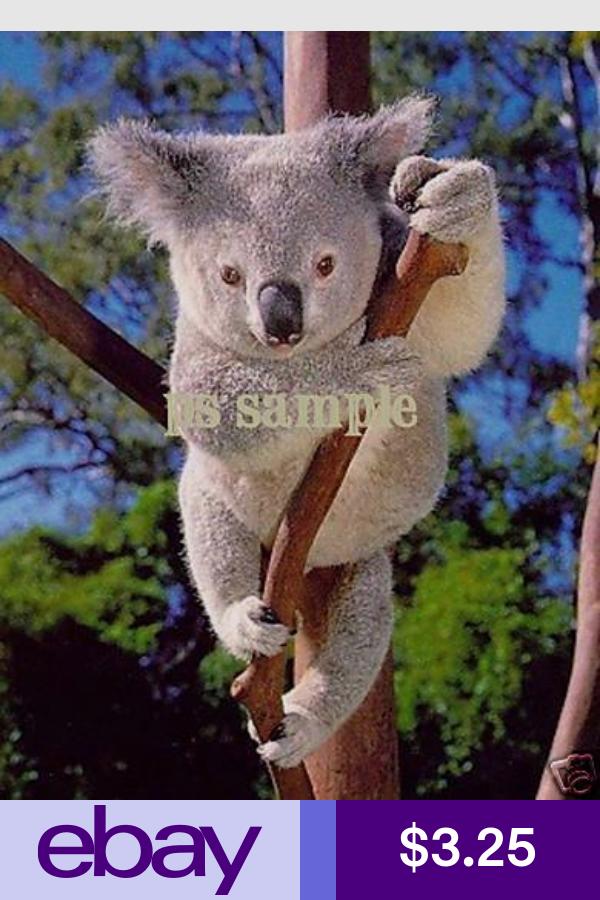 Fridge magnets . New Koala Bear Photographs