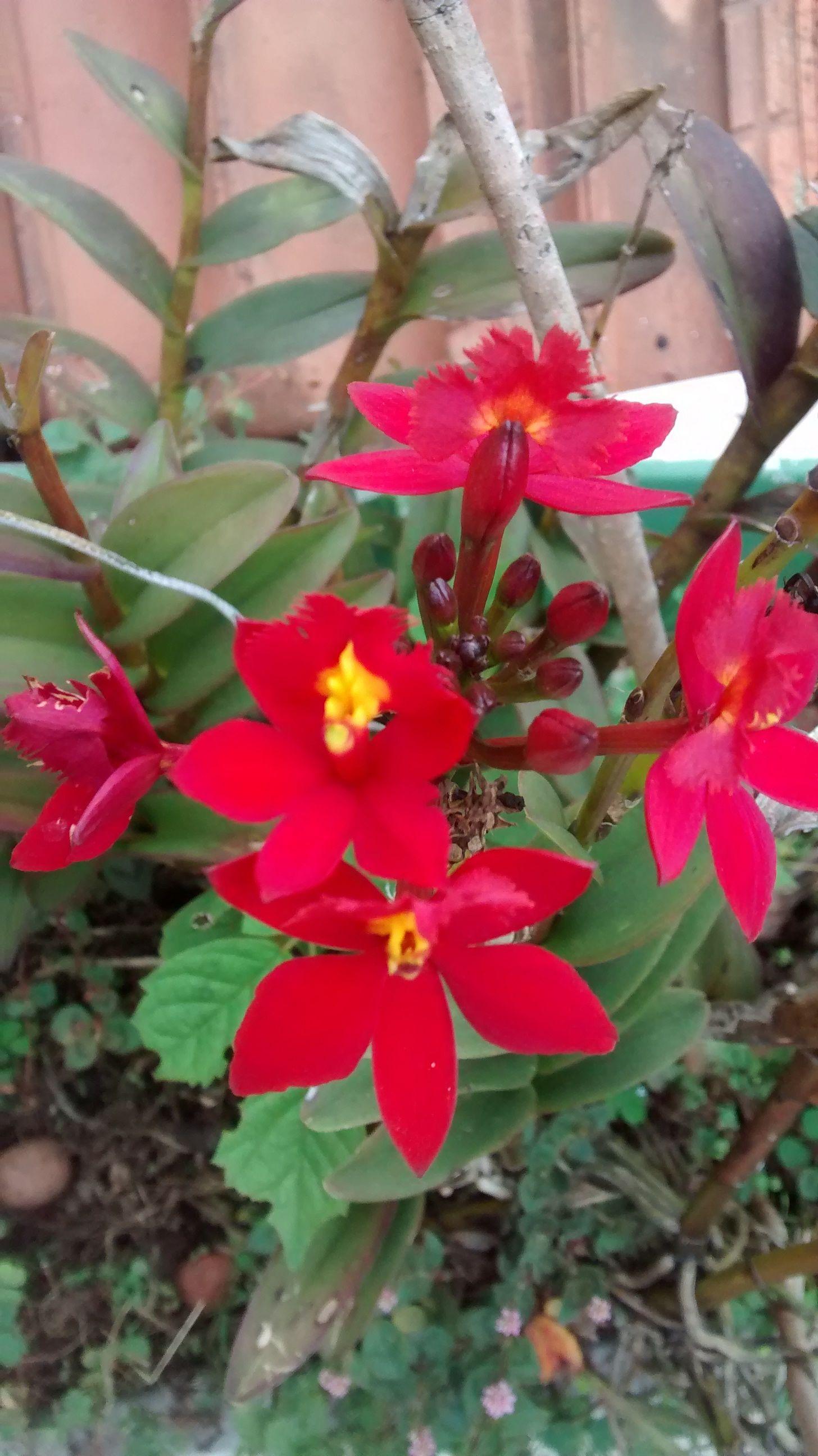 Orquídeas de terra