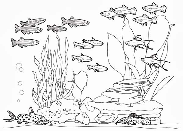 Complete Fish Tank Coloring Page Netart In 2020 Fish Sketch Coloring Pages Fish Tank