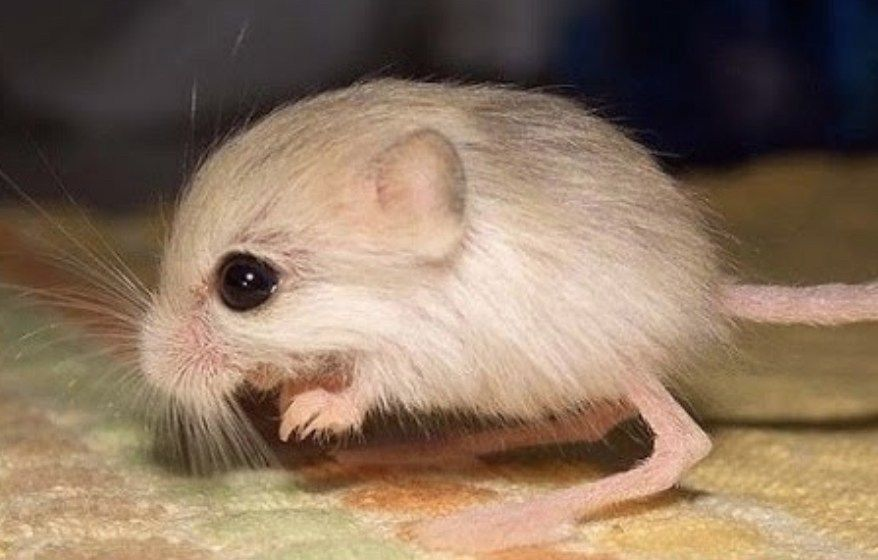 23 Smallest Animals On The Planet Best Life Cute Small Animals Animals Small Pets