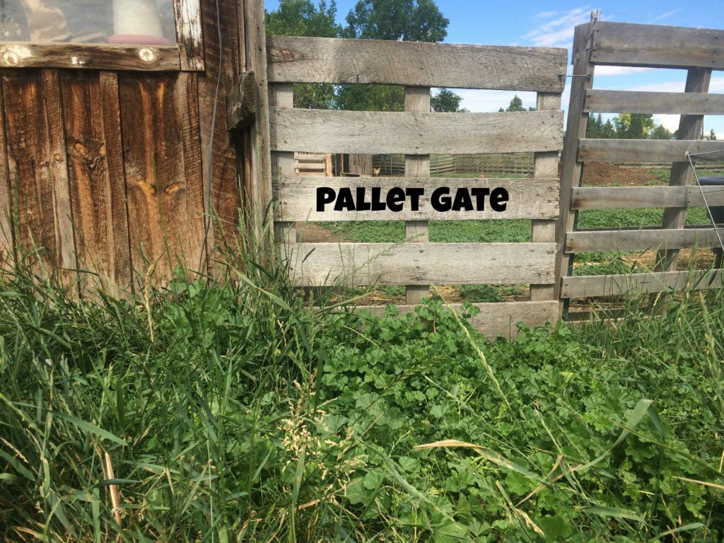 Pallet fence great for small livestock goats pinterest pallet