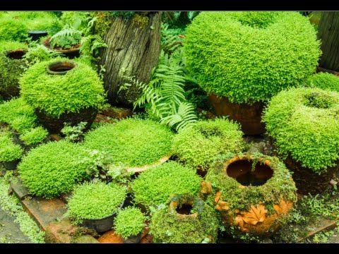 How To Grow Moss Garden Indoor, Growing A Moss Garden