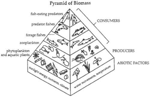 Food Pyramid Of Biomass Coloring Page For Kids Coloring Pages For Kids Coloring Pages Coloring For Kids