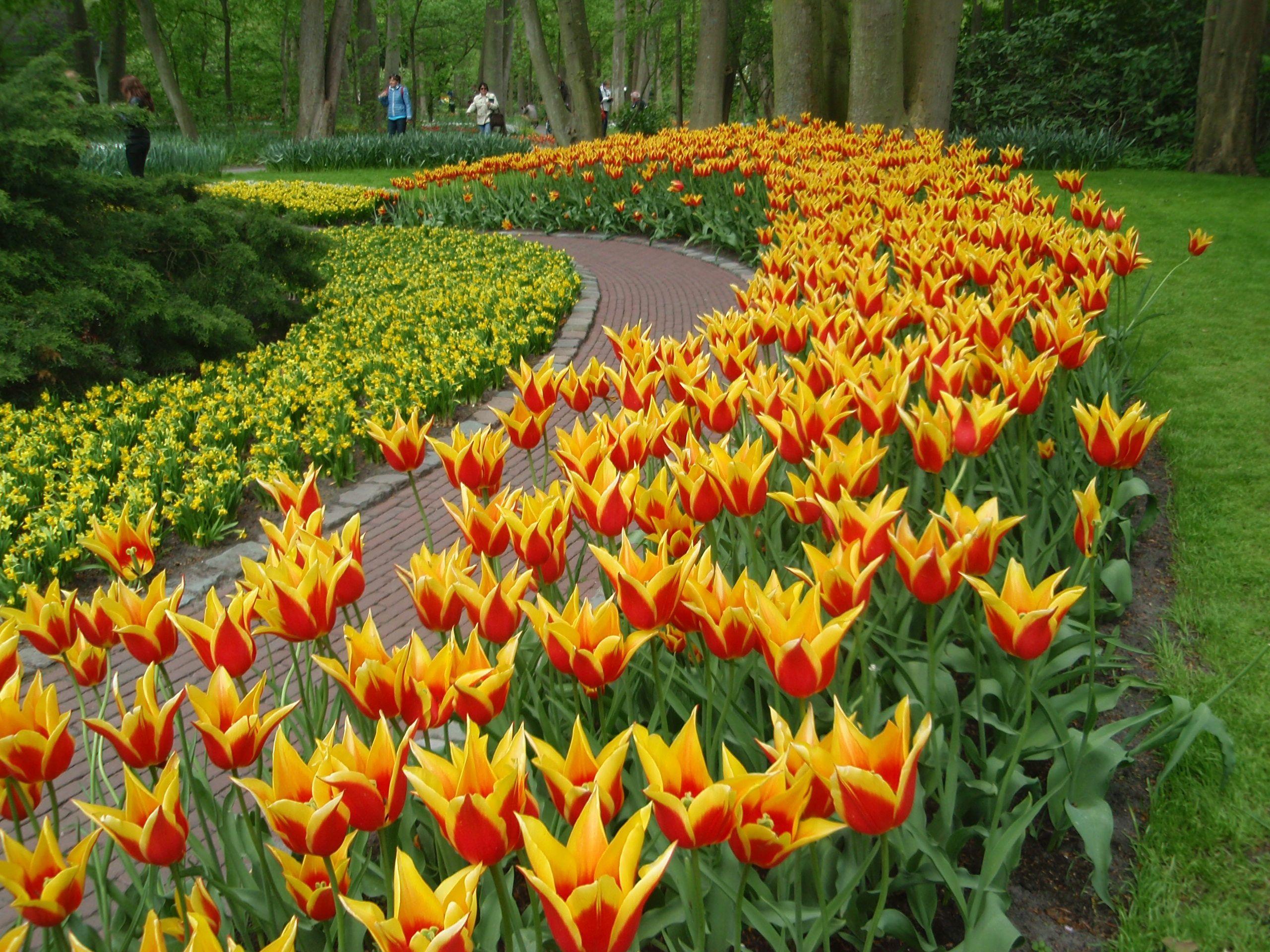 """Tulppaanien taikaa ©Hanna L: """"Kukkaloistoa Keukenhofin (tulppaani)puistossa Hollannissa 7.5.2015"""""""