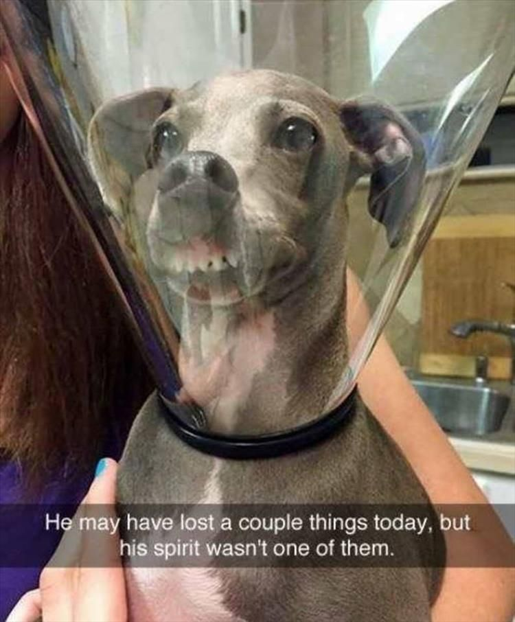 Funny Animal Pictures Of The Day 19 Pics Funny Animals Dog