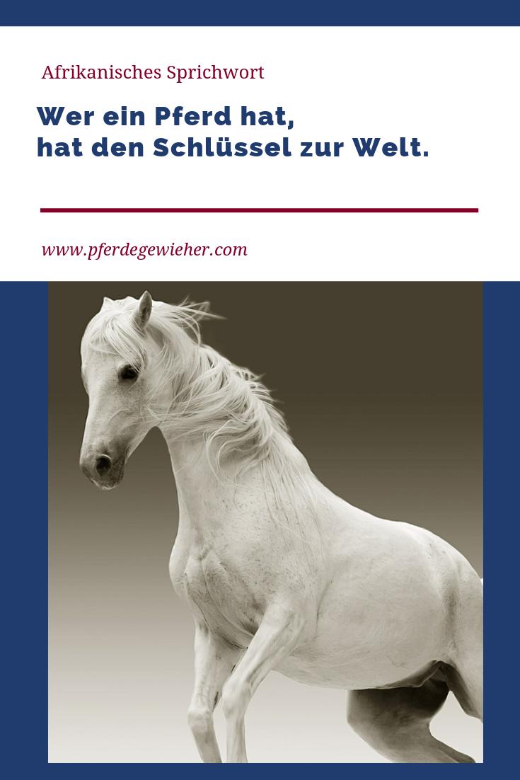 pin von pferdegewieher  weiterbildung auf pferdesprüche