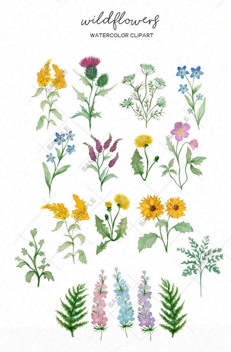Wildflower Clipart Botanical Hand Drawn Watercolor Floral Png Etsy Flower Doodles Floral Watercolor How To Draw Hands