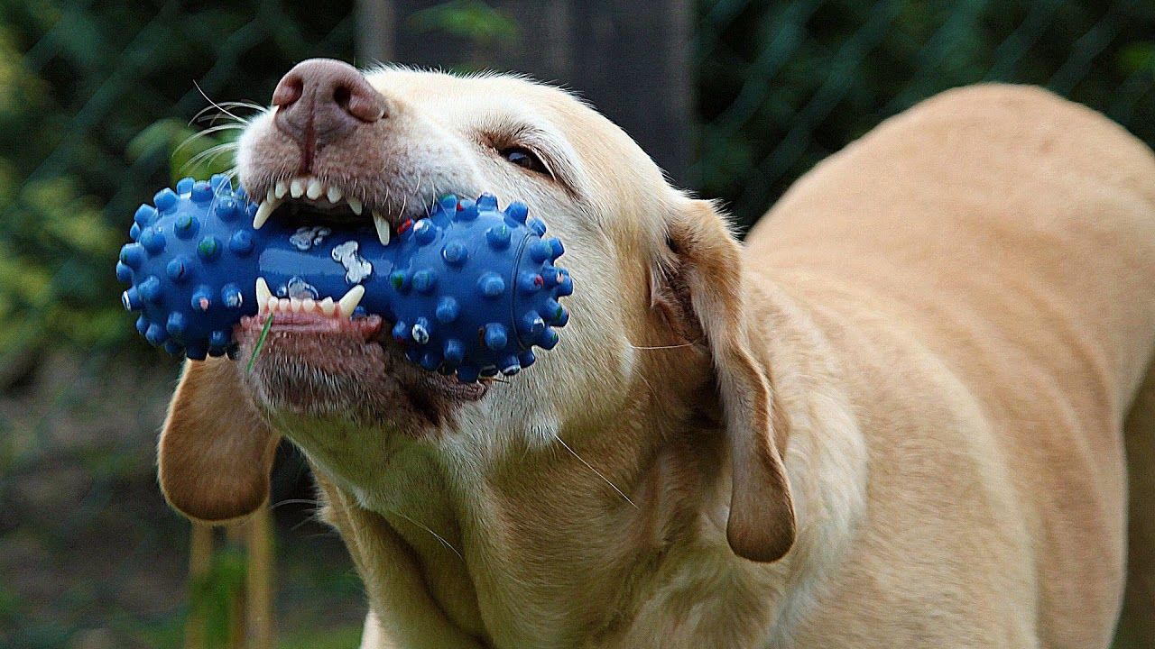 Squeaky Toy Sound Effect Dog Chew Toy Prank Your Dog Dog