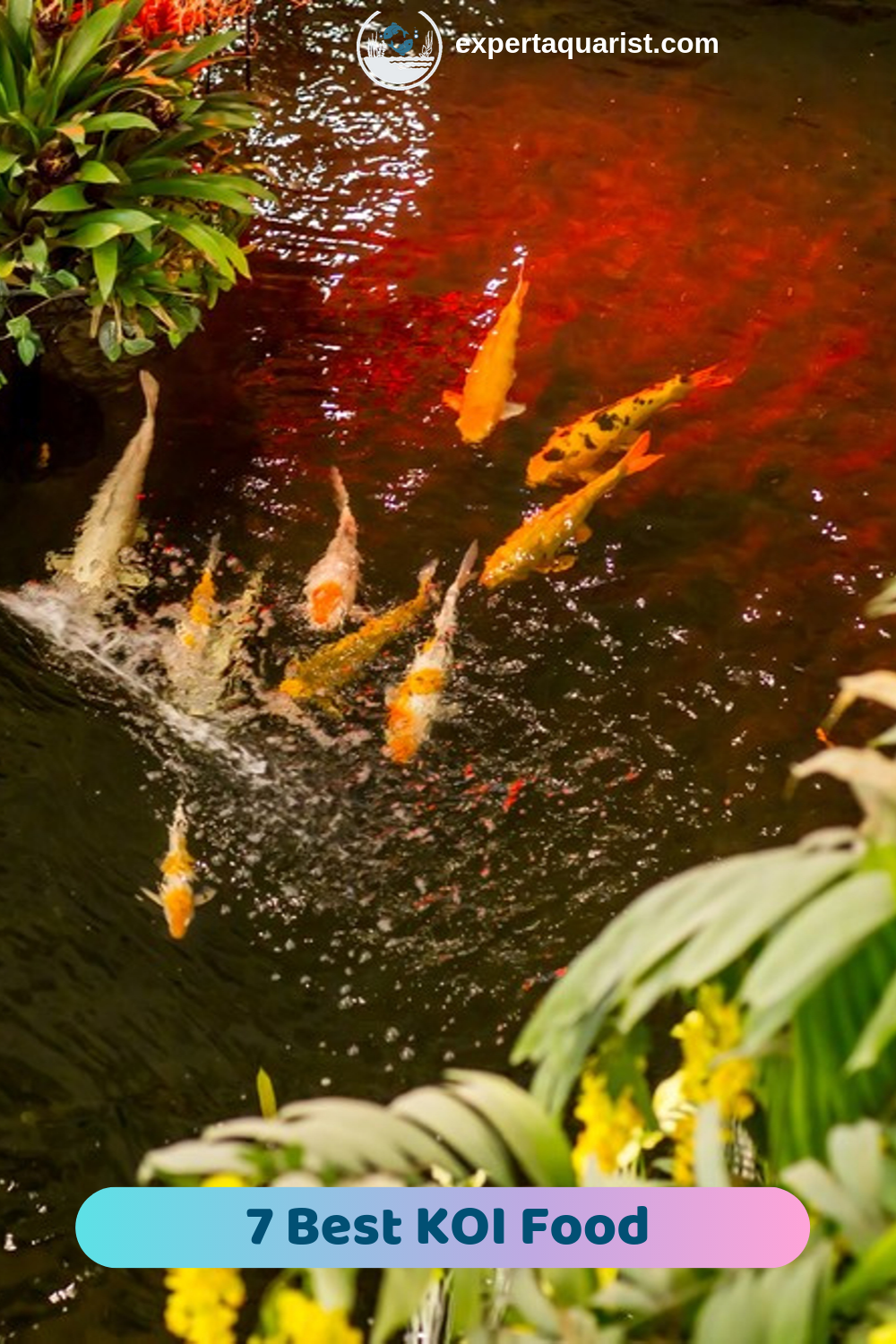 7 Best Koi Food For Growth Colors Guide Reviews Goldfish Food Koi Ponds For Small Gardens