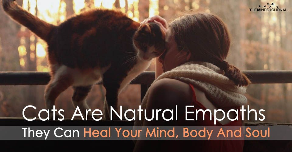 Cats Are Natural Empaths Who Can Heal Your Mind Body And Soul Empath Spirituality Body And Soul