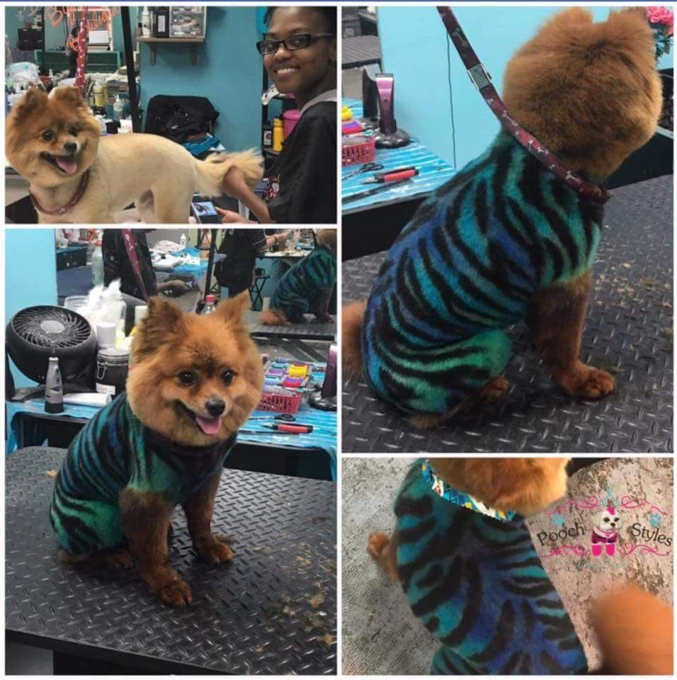Opawz Permanent Dye Can Be Used On Light Brown Coat Directly Thanks Pooch Styles Pet Grooming For Sharing Pet Grooming Creative Grooming Dog Grooming Supplies