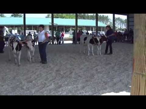 Judging Of Steer & Oxen ( Part-11 )         We have two classes being judged in this video. Nice to see how they are teamed up.