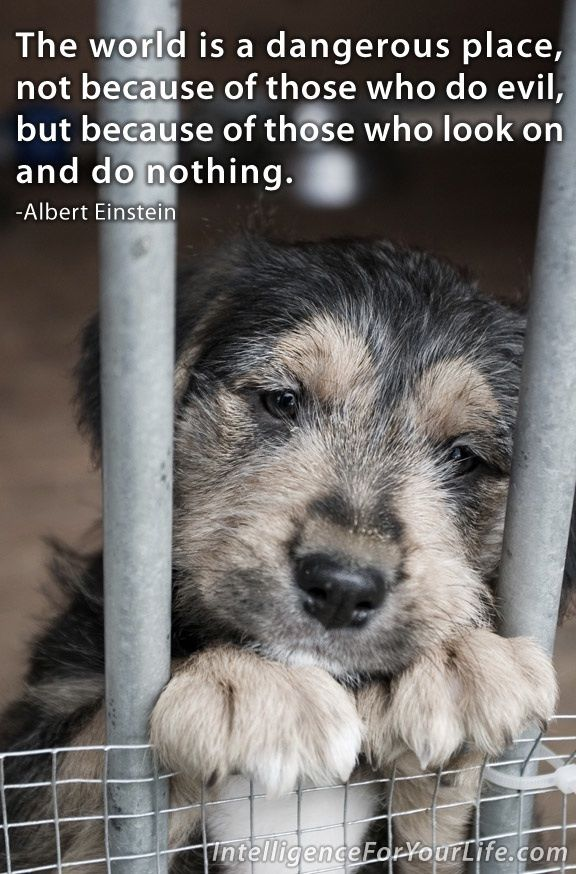 May Is Animal Abuse Awareness Month There Is Nothing More Innocent Unique Animal Abuse Quotes