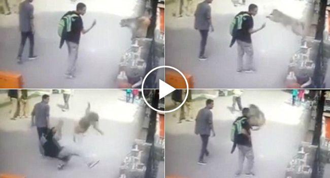 Macaco Ataca Jovem Depois De Ser Insultado Com Gesto Obsceno http://www.desconcertante.com/macaco-ataca-jovem-depois-de-ser-insultado-com-gesto-obsceno/