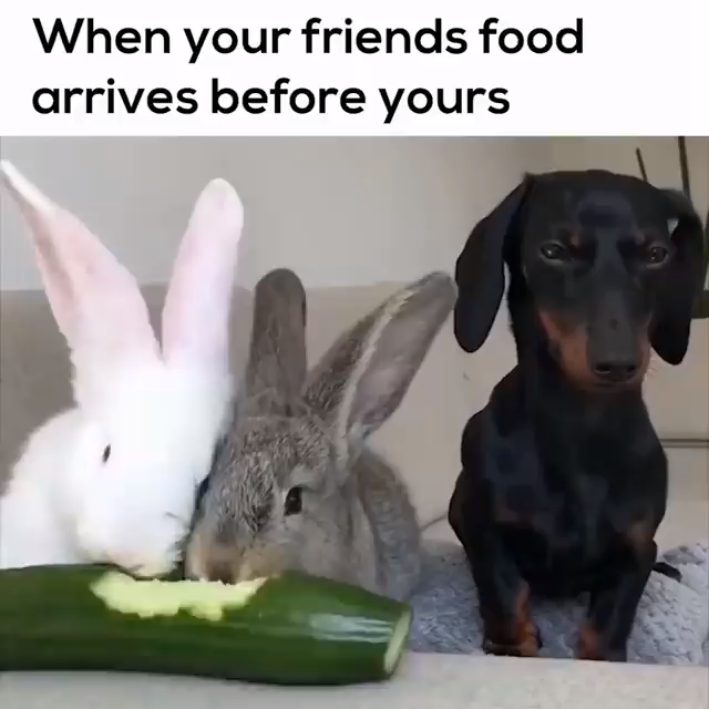 New Funny Pets Hungry and Upset Dachshund Funny Dachshund Videos|Dog Videos|Pet Videos|Funny Videos|Funny Dog Videos|Funny Pet Videos|Cute Pet Videos|Sausage Dog Videos|Hot Dog Video|Dogs|Cute Puppy videos|Doxie videos|Dachshund Dog Videos| Weenie Dog videos|Doxie Videos|Weiner Dog Videos|Funny Pet Video|Sausage Dog Videos|Hot Dog Video|Dogs|Cute Puppy videos|Teckel Video|Dackel Videos|Puppy Videos|Cute Doxie videos|Dachshund Dog Videos|Weenie Dog videos|Cute Dachshund Videos|Wiener Dog Videos| #dogs #dogvideos  #videos #video #afflink 6