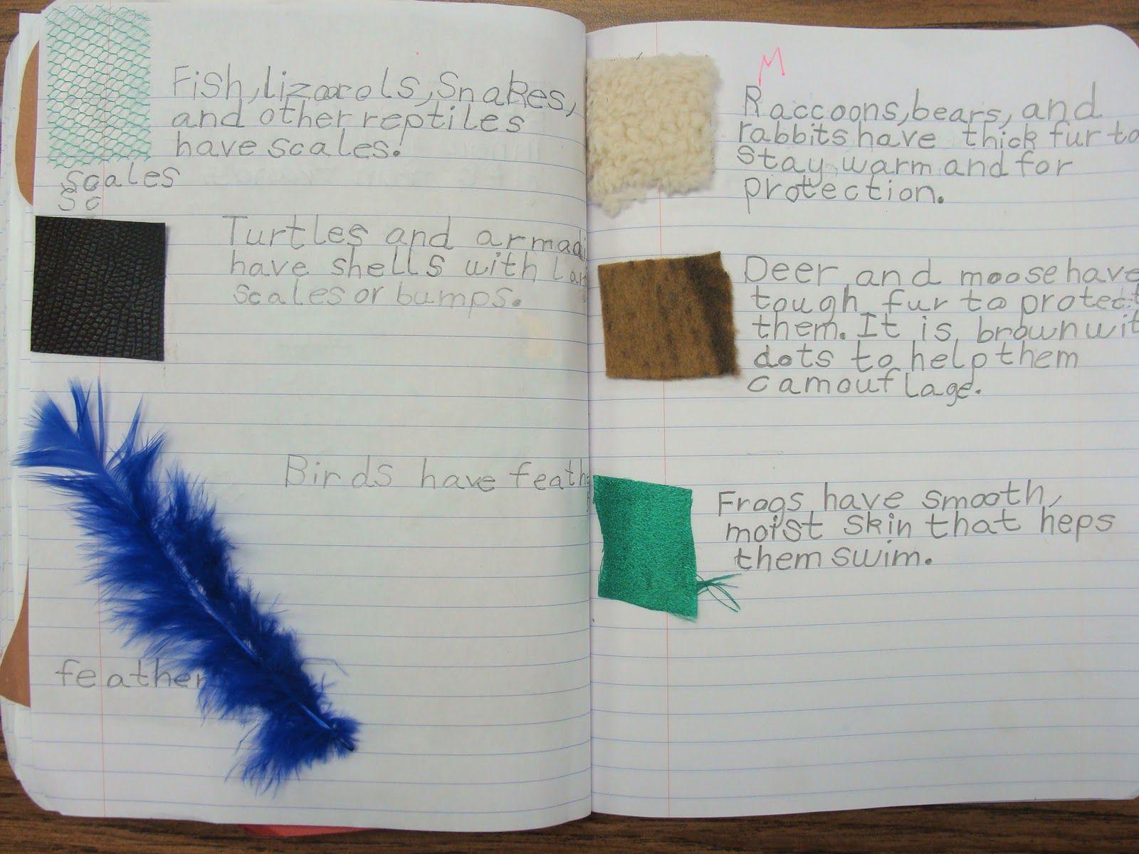 Animal Adaptations Notes