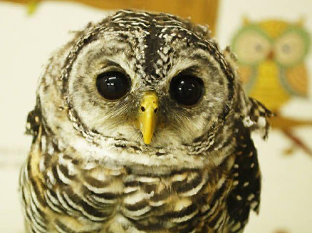 Befriend an owl...