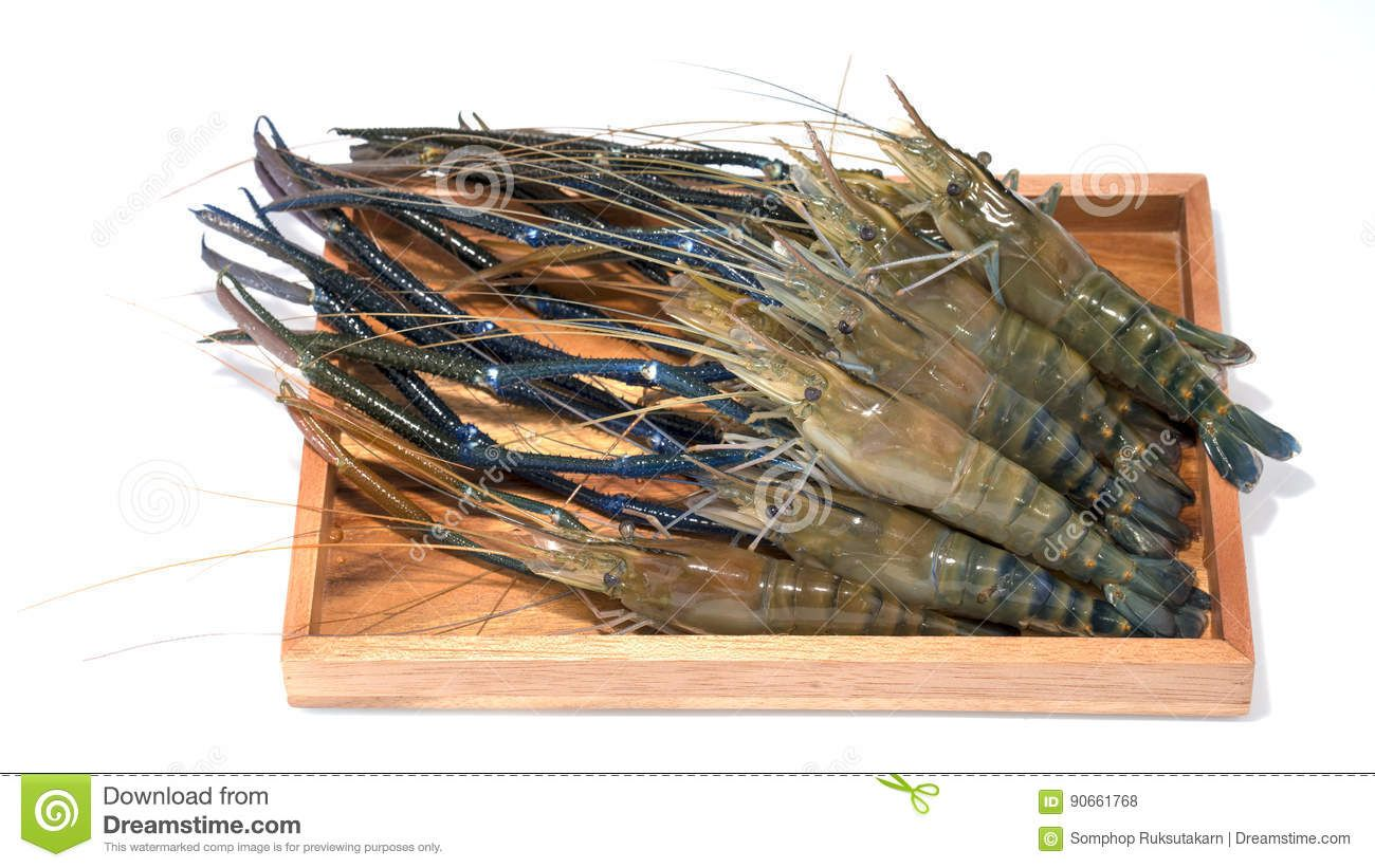 Raw Giant Freshwater Prawn, Giant River Shrimp - Download